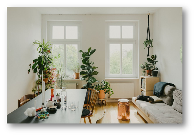 Dining area with house plants - SSID